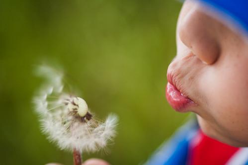 παιδί πικραλίδα ή παιδί ορχιδέα